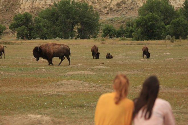 People enjoying bison at Theodore Roosevelt National Park, North Dakota.