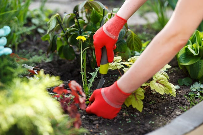 Weed control can be a challenge for home gardeners.