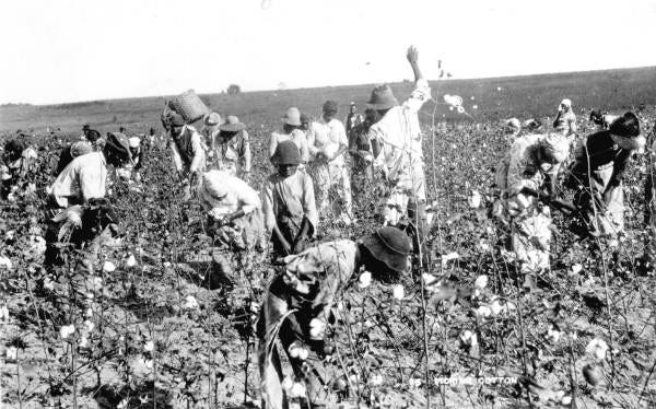 Ex-slaves and children picking cotton in the Jefferson County fields. (Circa 1890)