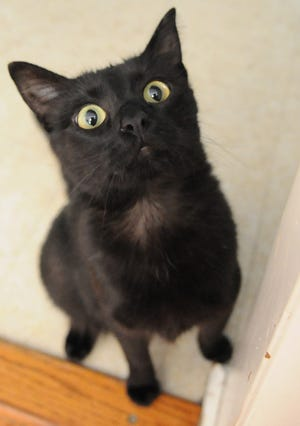 Kiara, a black shorthair, went missing for over four months and was found six miles west of Salina at the Rolling Hills Zoo in late March. The cat was turned into the Salina Animal Shelter and was identified by a microchip.