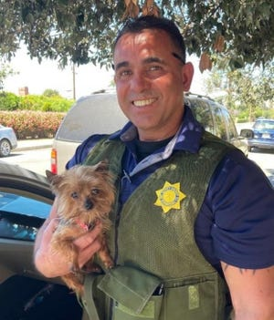 """Apple Valley Sheriff's Detective Roosevelt  Dutra with """"Max"""" the miniature Yorkshire Terrier, who was allegedly stolen from a gathering in Apple Valley."""