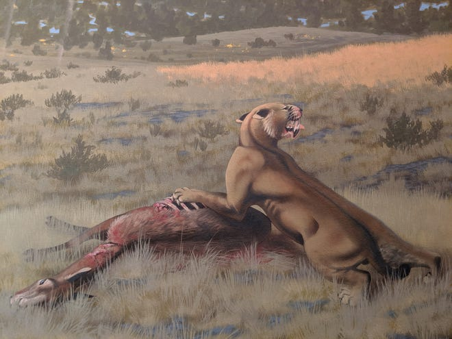 A saber-toothed cat, or a Machairodus lahayishupup, eats a Hemiauchenia, a camel relative. The image is part of a mural of the Rattlesnake Formation of central Oregon. The painting is exhibited at John Day Fossil Beds National Monument, part of the National Park Service.