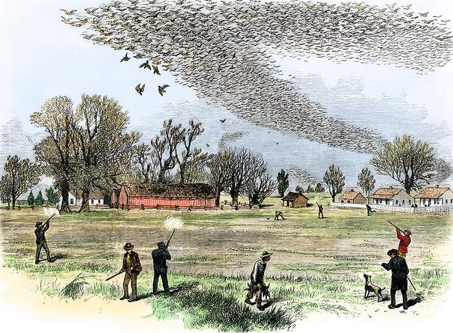 A flock of passenger pigeons being hunted in Louisiana, July 3, 1875, pictured in The Illustrated Shooting and Dramatic News. Theodore Day (1837-1916), a naturalist who lived in Dyberry, Wayne County, Pa., recalled seeing vast flocks of these now extinct birds pass over Wayne County, Pa., and last saw them in West Virginia, in 1876.