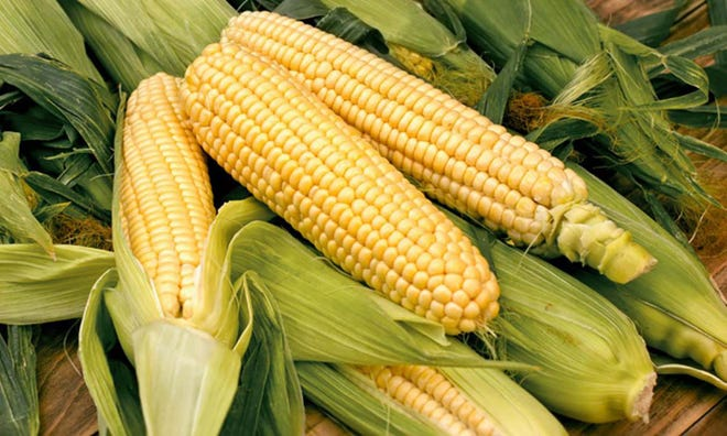 Certain steps need to be taken before choosing an herbicide to control weeds in sweet corn.