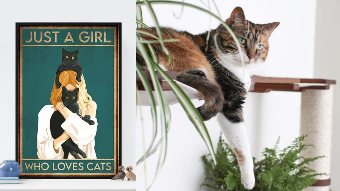 20 things every self-proclaimed cat lady needs