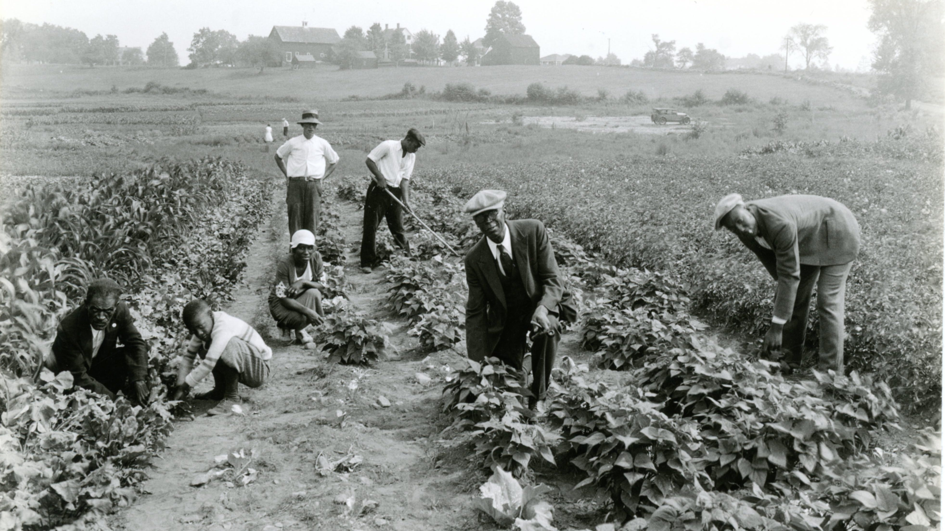 An unidentified Black family poses next to their subsistence garden plot off Thaxter Road on land loaned by the Portsmouth Building Association, c. 1935. In the background is the Sanderson family barn on Spinney Road.