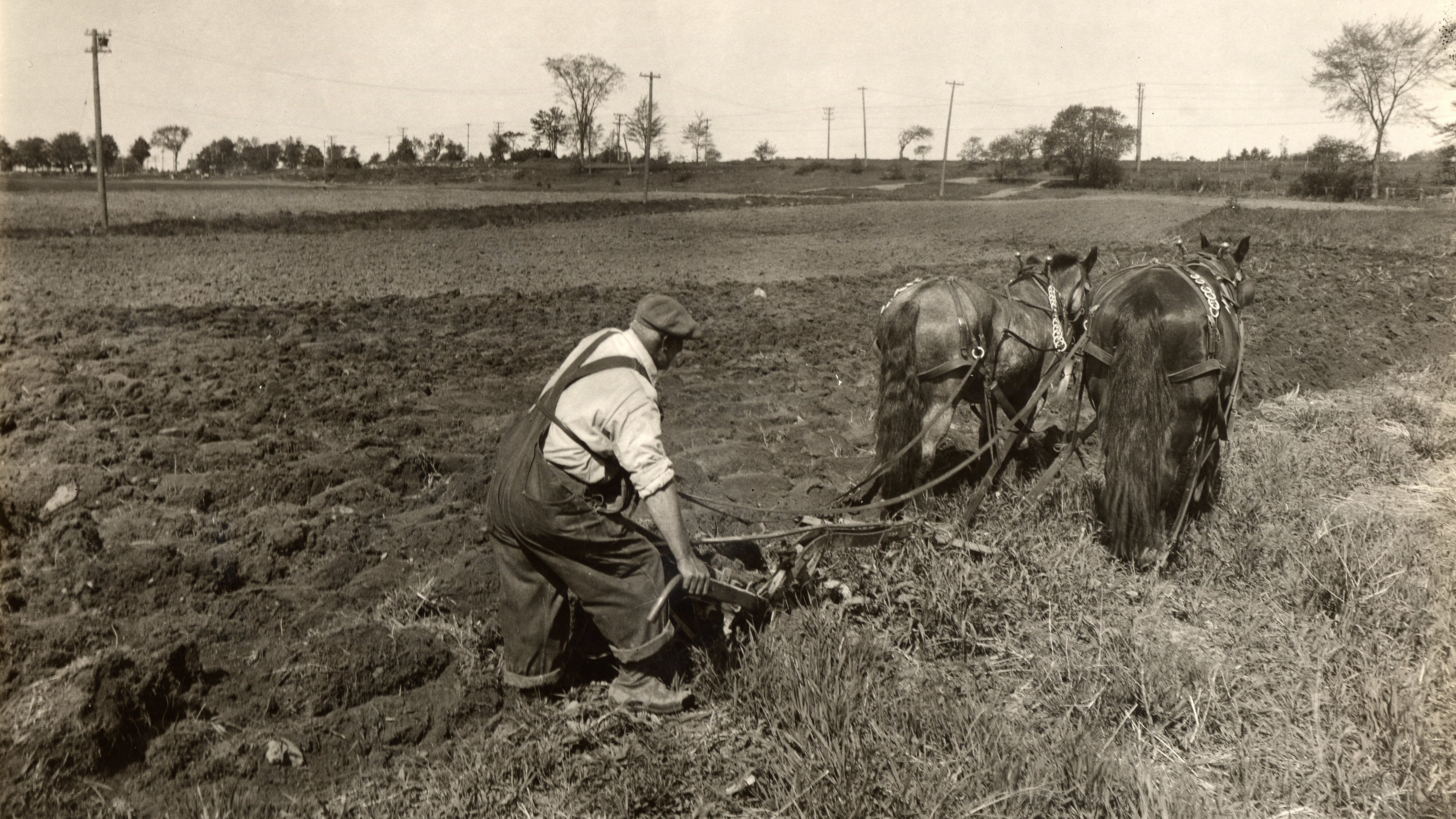 An unidentified man plows the fields on land loaned by the Portsmouth Building Association for the subsistence gardens, c. 1935. The view is believed to be looking toward Islington Street, and the raised bed in the distance is the Boston & Maine railroad tracks.
