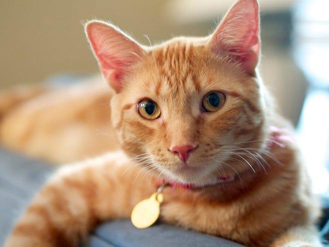 Pet Talk offers tips for administering feline medication.