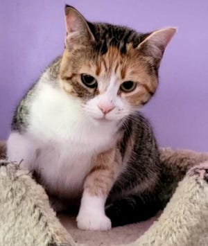 Lizzy is waiting for a new home at the Humane Society of Ottawa County.
