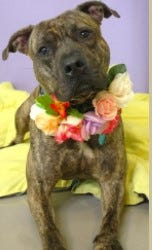 Ernesto is among the dogs currently available for long-term fostering through the Franklin County Dog Shelter