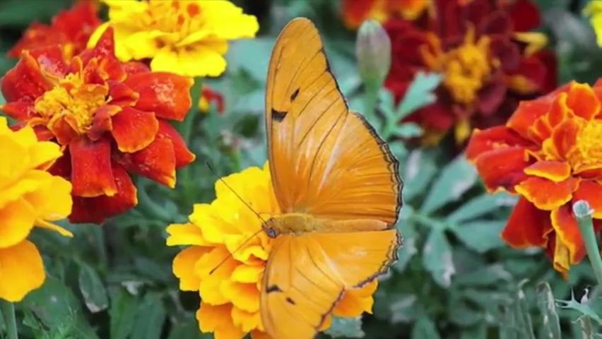 Mother's Day weekend: Butterflies, Art Climb, food truck rally