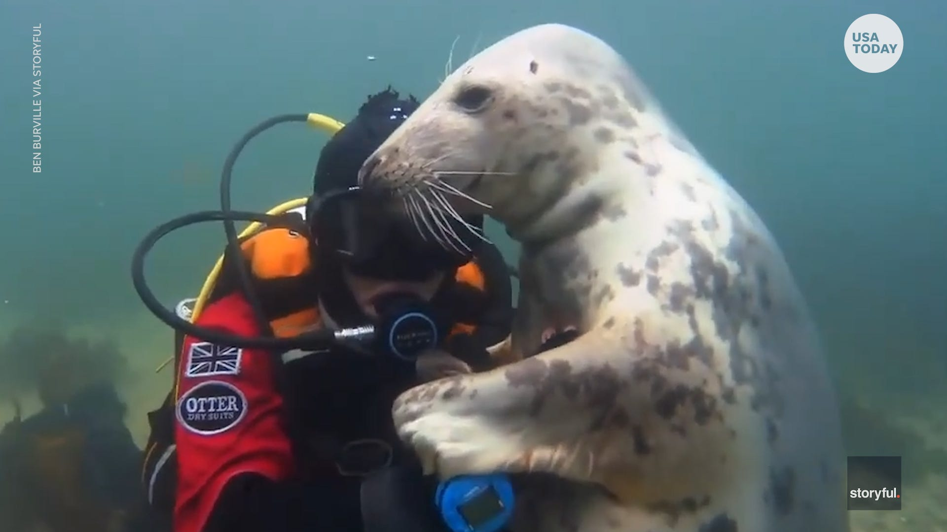 Seal and diver form touching bond while holding hands