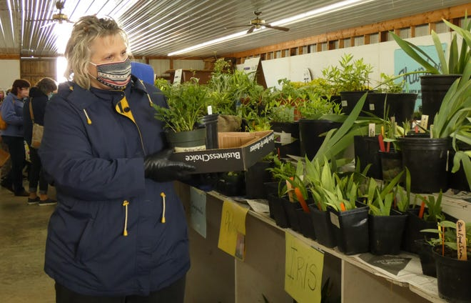 Dawn Spiegel of Bucyrus selects plants at the Earth, Wind and Flowers Garden Club's annual plant sale on Saturday morning at the Crawford County Fairgrounds.