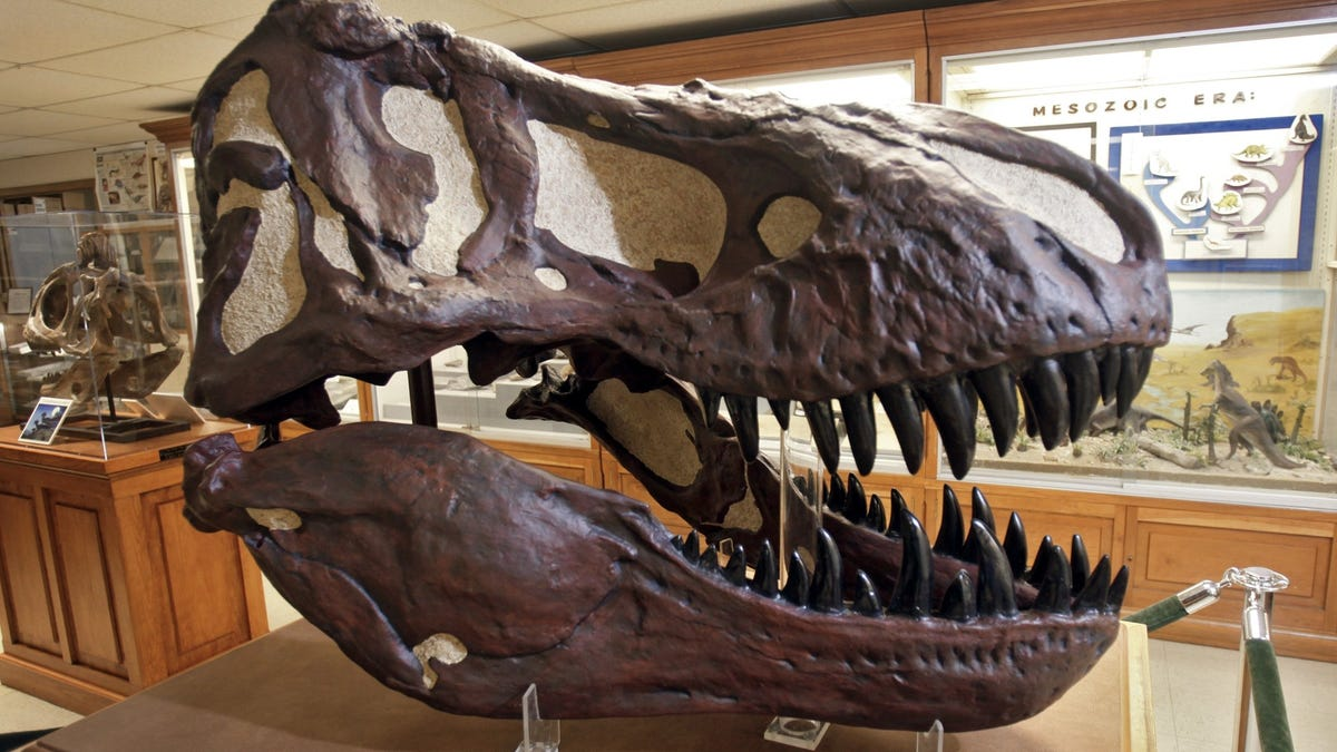 Geology: All tyrannosaurs were not created equal