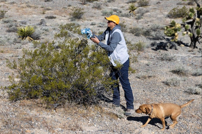Christian Daniels, 15, retrieves a stray balloon with his dog, Ruby, on Saturday, April 17, 2021, in Las Vegas. Daniels and his dad, Bill, go into desert areas to retrieve stray balloons that desert tortoises could eat and die from.