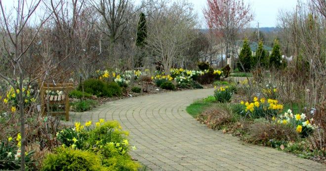 Paved walkways through the Secrest Arboretum.