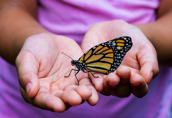 Learn how to increase habitat for Monarch butterflies at an online workshop on June 8.