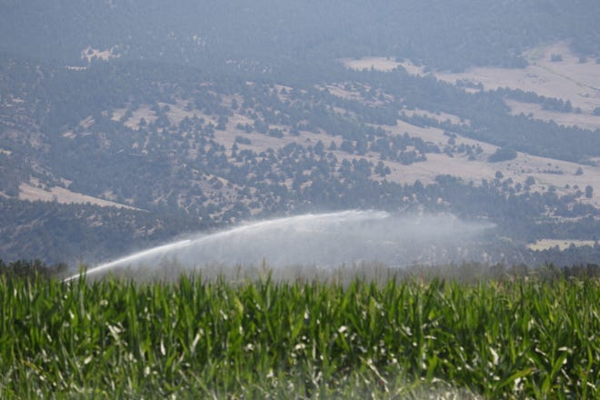 Crops along Highway A-12 are irrigated with an agricultural sprinkler in August of 2020, as the fight for water in the Big Springs area began to heat up.
