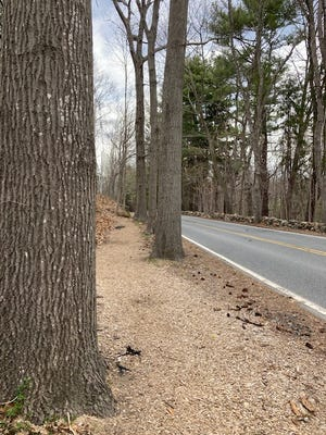 A wood chip sidewalk on Ash Street in Hamilton helps preserve mature tree canopy.
