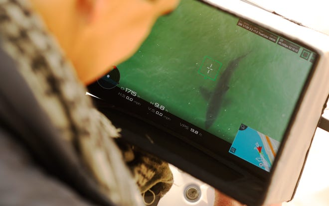 Drone photographer Carlos Gauna views a great white shark on his monitor as he captures a video of great white sharks along the Santa Barbara County coast, Thursday, April 22.