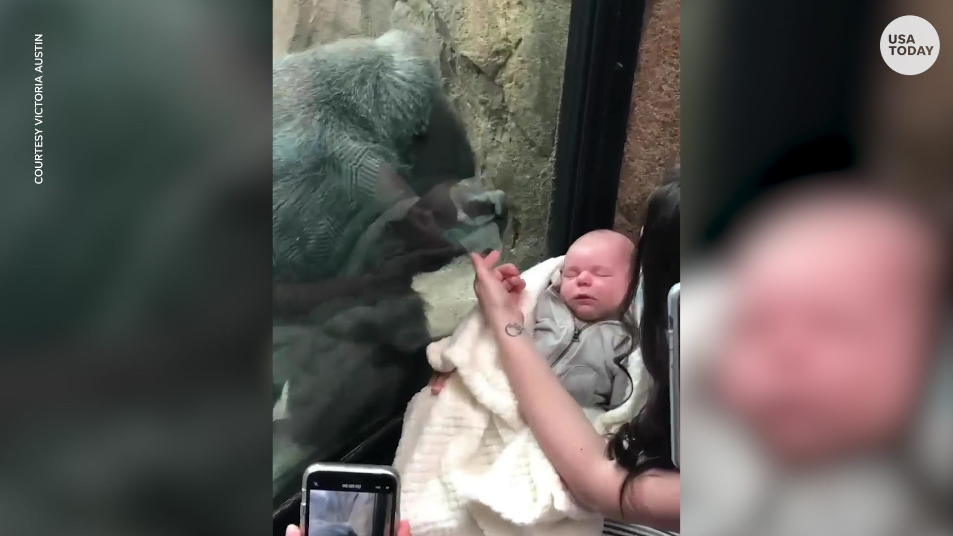 Mother and gorilla share unique bond over newborn babies
