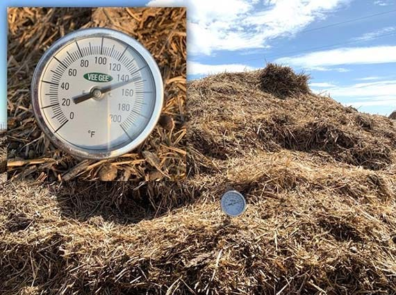 A manure pile from a dry lot is undergoing thermophilic decomposition, with the internal temperature between 130 and 150 degrees.