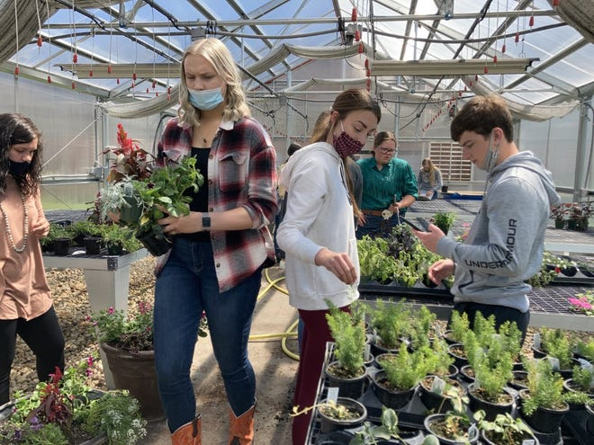 In Cambridge High School's greenhouse on Friday, May 7, student teacher Sydney Riden, far left, supervises horticulture students preparing planters for the Village of Cambridge. Students in front from left are Paige Leander, Mollie Bennett and Carson Nodine; behind them, MacKenzie Olson, and in back, Courtney Swemline.