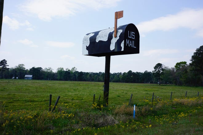 Towering over a cattle farm on Quacco Road is a gigantic 16-foot mailbox standing on a 20-foot pole .