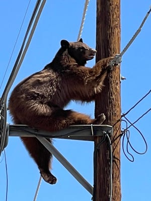 A bear climbed up two utility poles on Sunday, causing a brief closure of a portion of the highway near Tucson as authorities tried to chase it away.