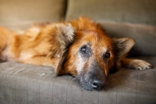 Dogs, like people, often refuse food and water when the end is near. Consulting a vet is always a good idea.