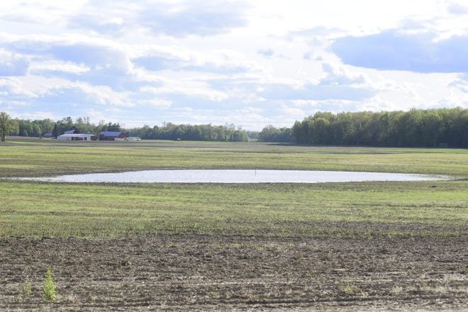 A large puddle of water sits in the middle of a field planted off Ohio 100 just outside of Bucyrus.