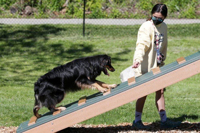 Katie Adorable uses a treat to coax Baxter over an obstacle in the Happy Hollow Dog Park, Wednesday, May 12, 2021 in West Lafayette.