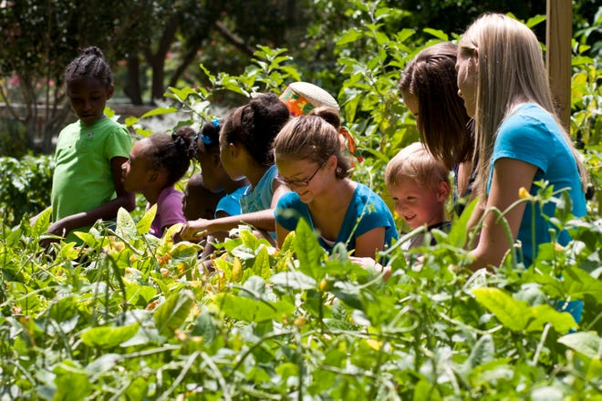 Gardening together allows for sharing of seeds, cuttings, and stories.