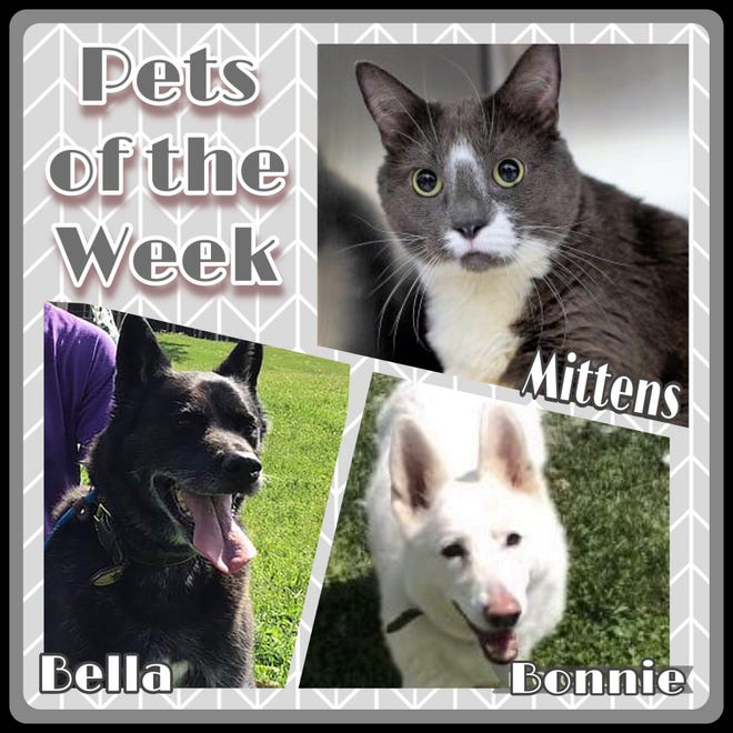 Pets of the Week: Bella & Bonnie, and Mittens