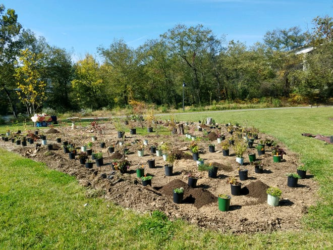 The pollinator habitat on the Wilma Dykeman Greenway has plants native to North Carolina in order to save native pollinator species.