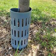 This trunk protector can help prevent injury from weed trimmers and mowers.