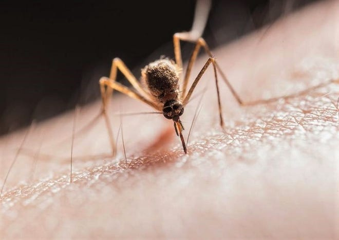 Plentiful rains are providing breeding grounds for mosquitoes in Wichita Falls. The city-county health district is getting complaints for residents.