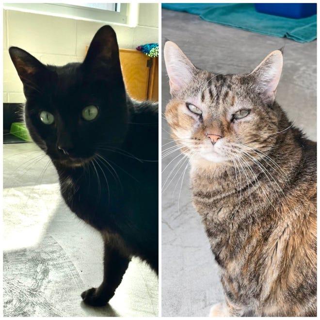 Orion and Sasha