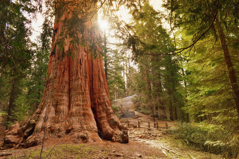 56a213cf 36fc 4eb1 991b 471825e647e9 sequoia national park 1890