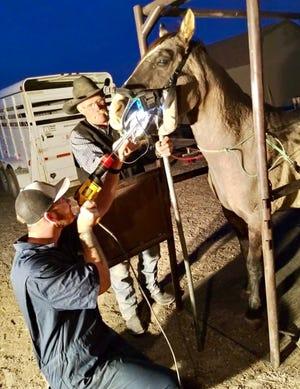 Bryan McDonald, a mobile vet, specializes in large animal medicine.