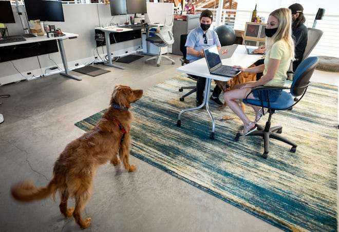 Paul English, left, and April Lannutti visit with Lannutti's dog, Ruby, as they and Jake Adler, background, work in the financial department of uShip. The company is among the Austin firms that have begun bringing its employees back to the office as the coronavirus pandemic retreats.