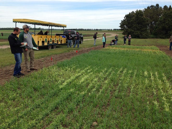 Participants receive updates on crop pest and soil management recommendations during NDSU Extension's annual crop management field school.