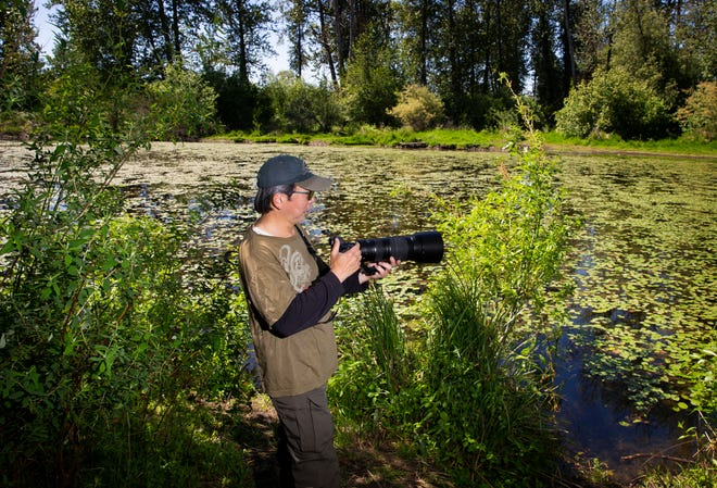 Photographer Norman Goo searches for birds at Delta Ponds off Goodpasture Island Road in Eugene.