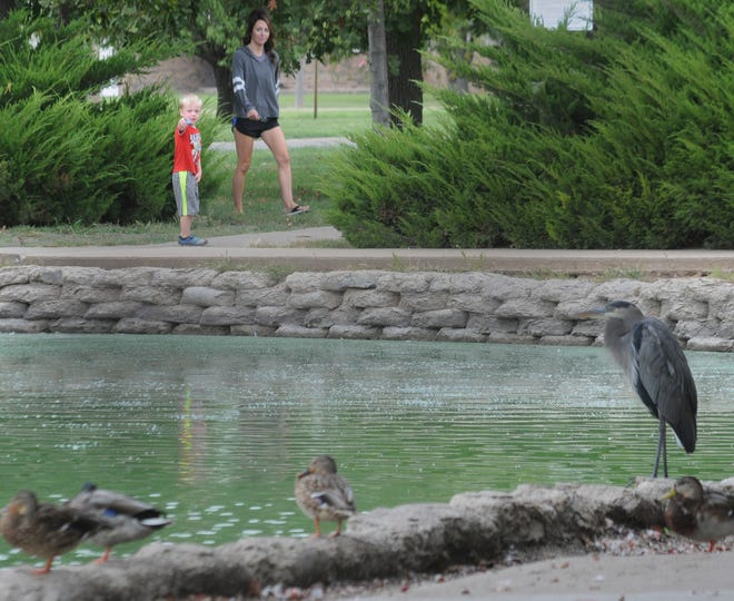 Granger Ptacek, 3, points out the ducks and the Great Blue Heron to his mother Margaret Ptacek, of Minneapolis, Kan., during their visit to Jerry Ivey Park last year. [Salina Journal File Photo]