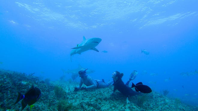Dr. Riley Elliott and Sophia Pallavicini are photographed observing Caribbean reef sharks.