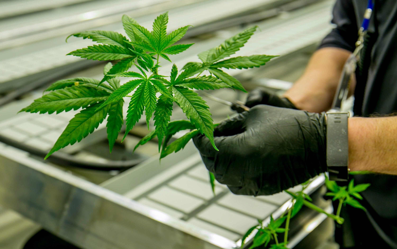 Marijuana bills mostly stall in Texas Legislature