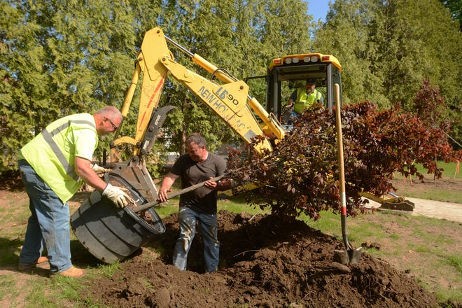 """Town of Plainfield Highway employees Ron Berube, left, Dan Bernier and Kevin Henault, in backhoe, set one of four """"Flame Thrower"""" trees Tuesday at Moosup Memorial Park in Moosup."""