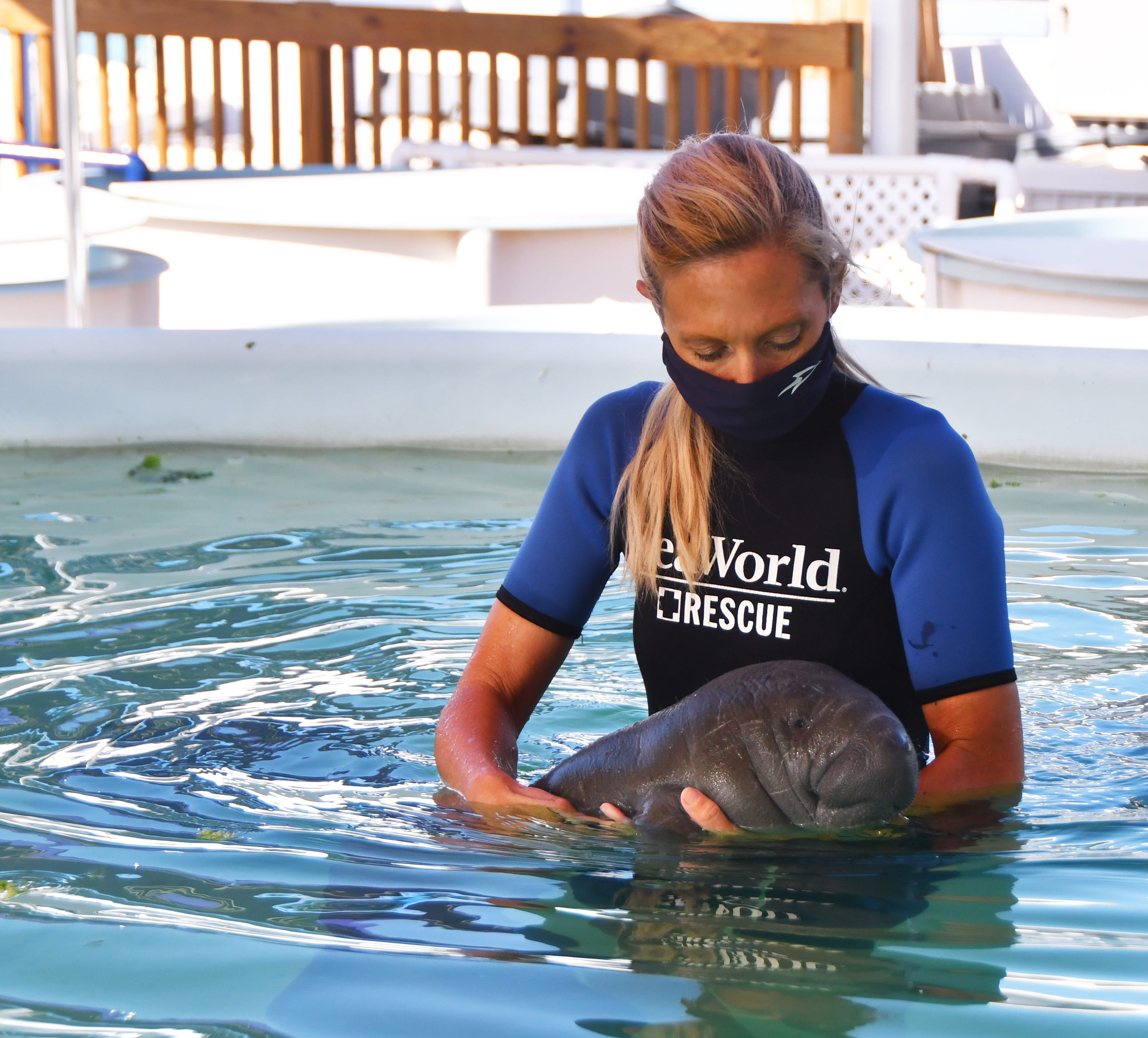 SeaWorld Senior Animal Care Specialist Kelly Cluckey walks an orphaned manatee over to the edge of the pool to tube-feed it.