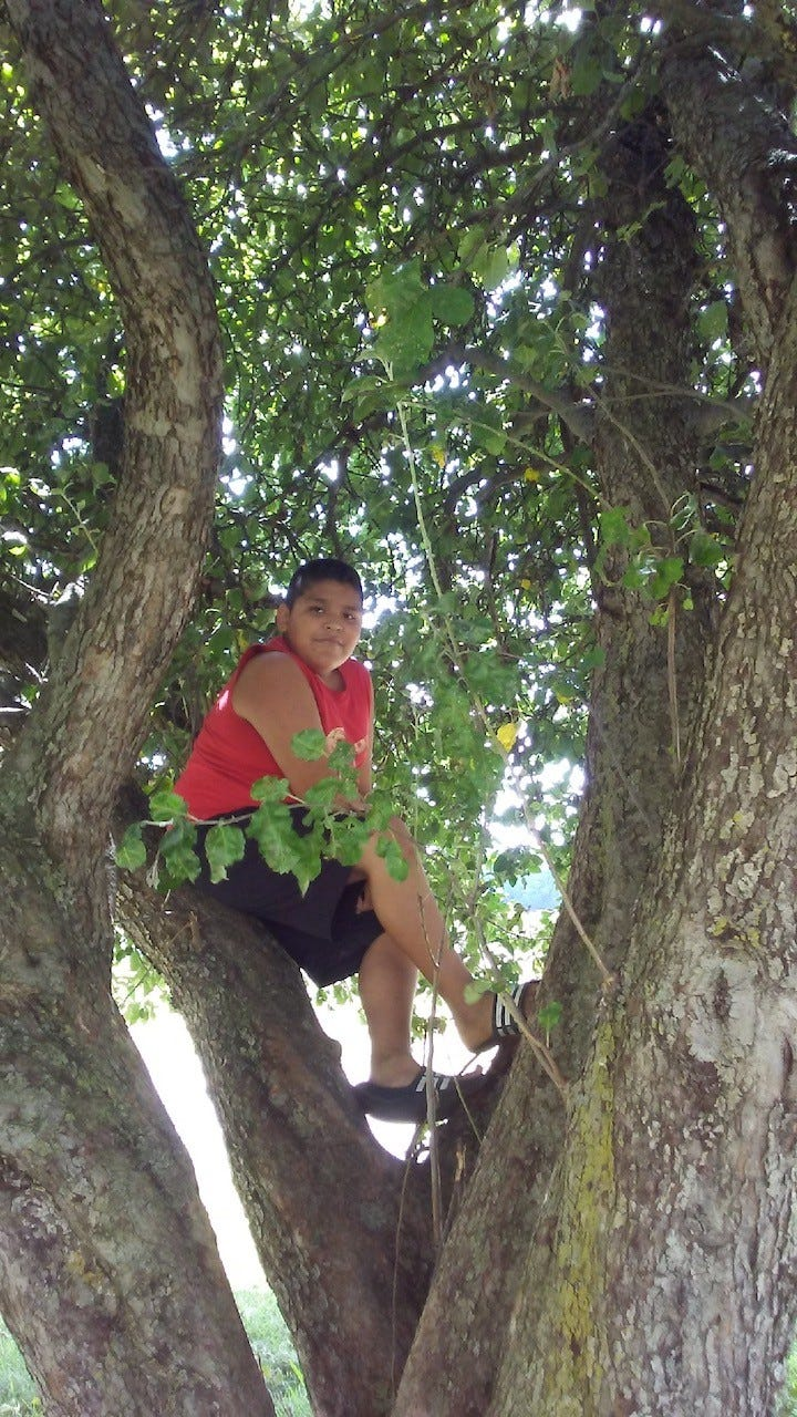 In his hunt for a better signal, Brandon Garcia, 13, a Plant City migrant student, often took his virtual classes early in the pandemic while perched in this apple tree in rural Michigan, where the family works during blueberry season.