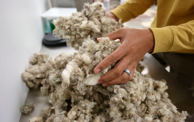 A lab technician mixes wool from 16 bales, from the same farm, to ensure a random selection at Wasatch Wool Laboratories in Midvale, Utah.